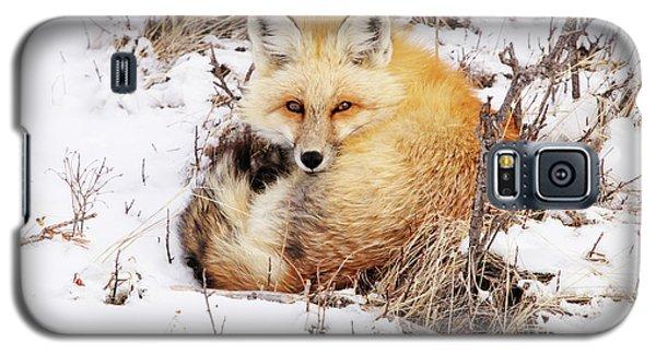 Little Red Fox Galaxy S5 Case
