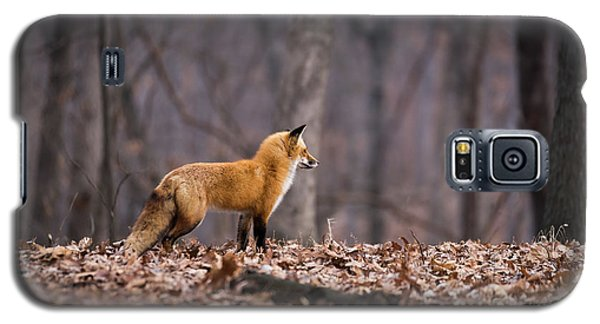 Little Red Fox Galaxy S5 Case by Andrea Silies