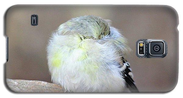 Little Sleeping Goldfinch Galaxy S5 Case