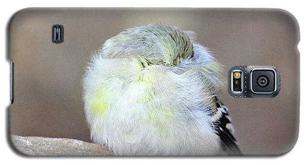 Little Sleeping Goldfinch Galaxy S5 Case