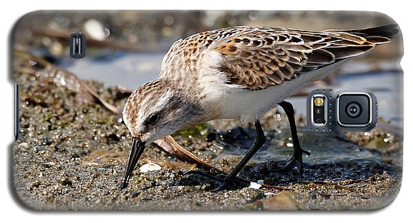 Little Western Sandpiper Galaxy S5 Case