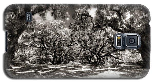 Live Oak Allee Infrared Galaxy S5 Case