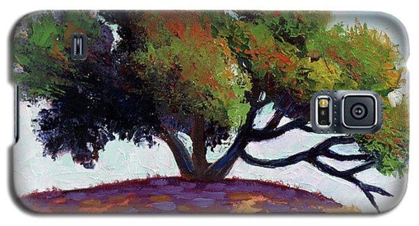 Live Oak Tree Galaxy S5 Case