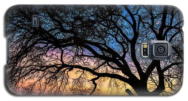 Live Oak Under A Rainbow Sky Galaxy S5 Case
