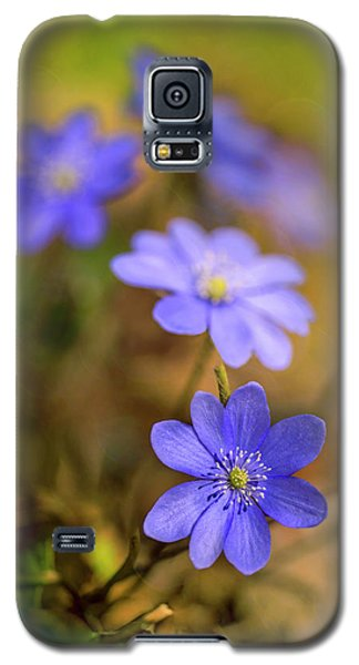 Galaxy S5 Case featuring the photograph Liverworts In The Afternoon Sunlight by Jaroslaw Blaminsky