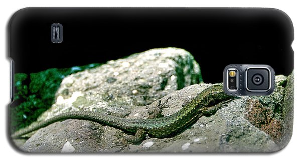 Lizard Galaxy S5 Case by Gouzel -