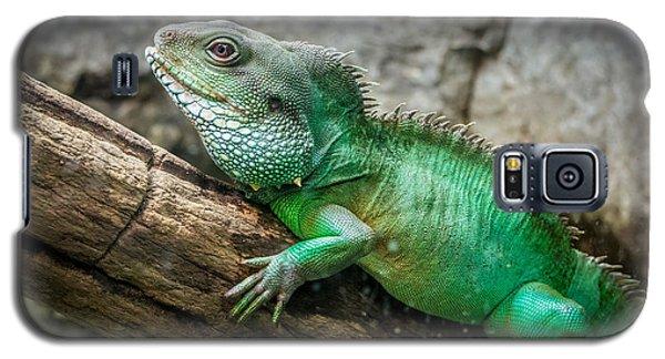 Lizard On Branch Galaxy S5 Case