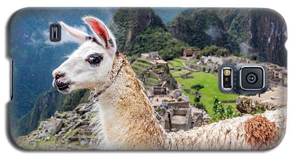 Llama At Machu Picchu Galaxy S5 Case by Jess Kraft