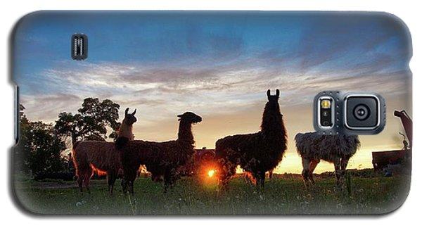 Llamas At Sunset Galaxy S5 Case