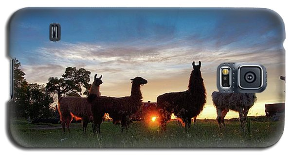 Llamas At Sunset Galaxy S5 Case