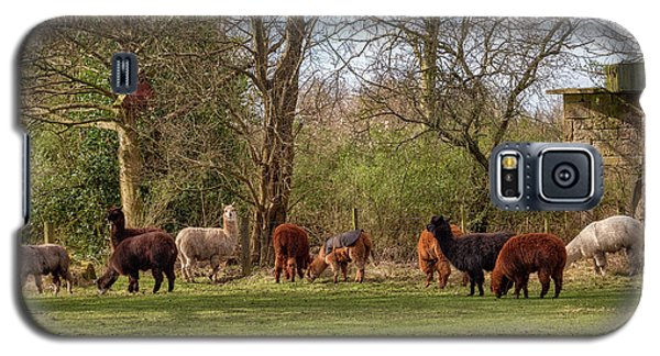 Galaxy S5 Case featuring the photograph Alpacas In Scotland by Jeremy Lavender Photography