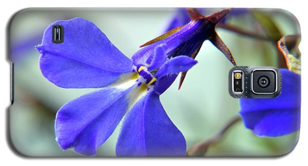 Galaxy S5 Case featuring the photograph Lobelia Erinus by Terence Davis