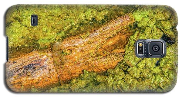 Log In Algae Galaxy S5 Case