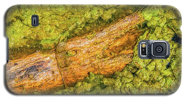 Log In Algae Galaxy S5 Case