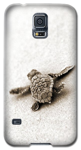 Loggerhead Galaxy S5 Case