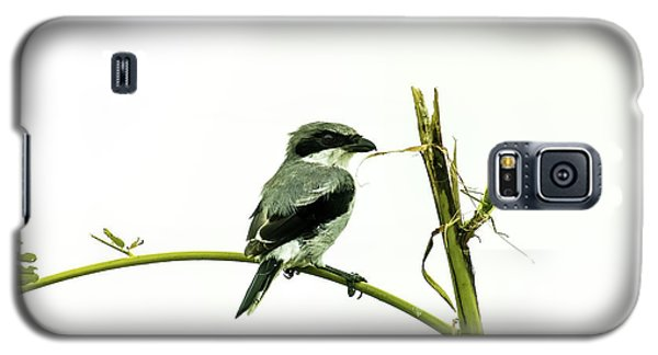 Galaxy S5 Case featuring the photograph Loggerhead Shrike And Mantis by Robert Frederick