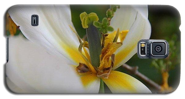 Galaxy S5 Case featuring the photograph London White Tulip by Jolanta Anna Karolska