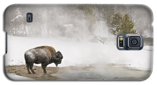 Bison Keeping Warm Galaxy S5 Case