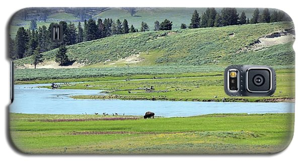 Lone Bison Out On The Prairie Galaxy S5 Case