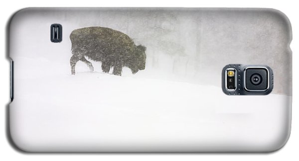 Lone Buffalo Bull In Winter Storm Galaxy S5 Case