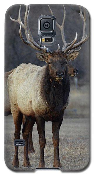 Lone Bull Galaxy S5 Case by Billie Colson