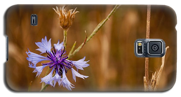 Galaxy S5 Case featuring the photograph Lone Cornflower by David Isaacson