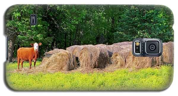 Lone Cow Guard, Smith Mountain Lake Galaxy S5 Case