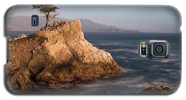 lone Cypress Tree Galaxy S5 Case