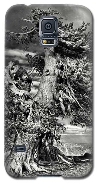 Lone Gnarled Old Bristlecone Pines At Crater Lake - Oregon Galaxy S5 Case by Christine Till
