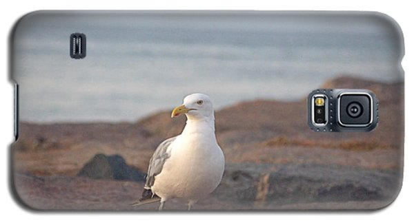 Galaxy S5 Case featuring the photograph Lone Gull by  Newwwman