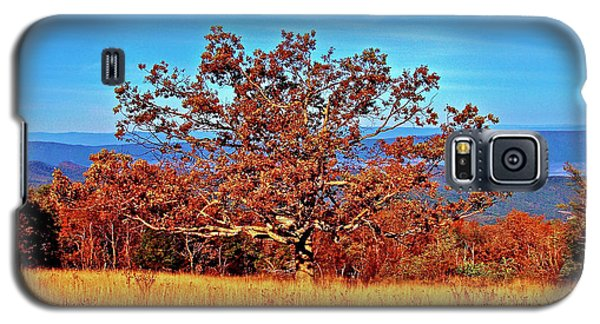 Lone Mountain Tree Galaxy S5 Case