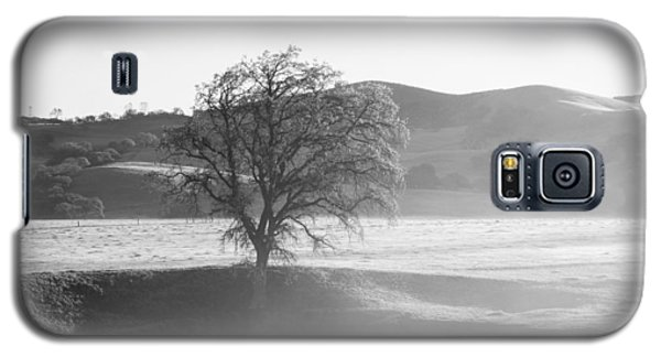 Lone Oak, Clearing Fog, San Andreas Rift Valley Galaxy S5 Case