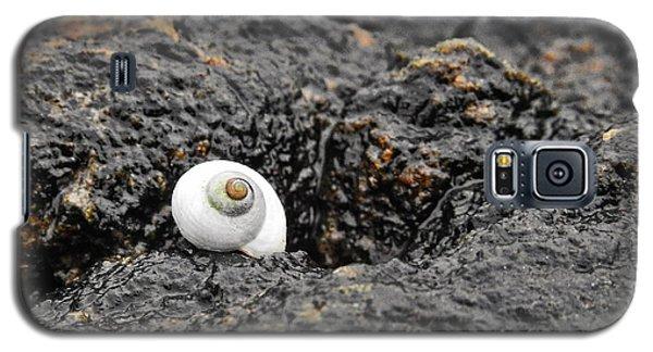 Lone Seashell Galaxy S5 Case