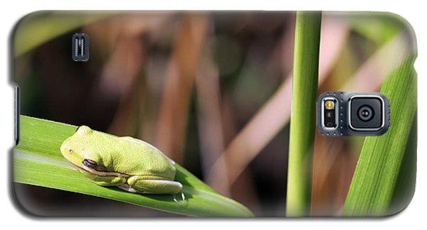Lone Tree Frog Galaxy S5 Case