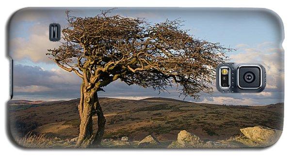 Lone Tree On Dartmoor Galaxy S5 Case