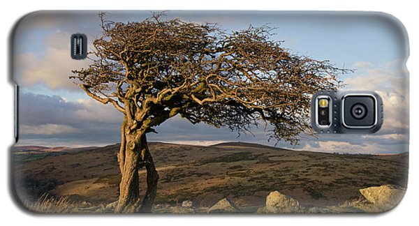 Lone Tree On Dartmoor Galaxy S5 Case