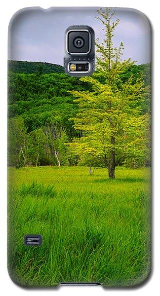 Lone Tree Sieur De Mont Woodland Acadia Galaxy S5 Case