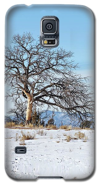 Lone Tree Winter Scene Galaxy S5 Case