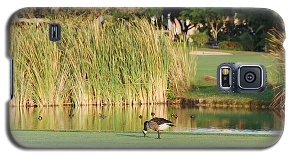 Lonely Goose On The Golf Course Galaxy S5 Case by Jan Daniels