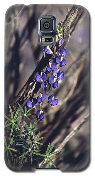 Lonely Lupine Galaxy S5 Case