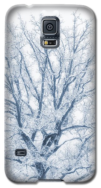 Galaxy S5 Case featuring the photograph lonely Oak tree in snowy, misty landscape by Christian Lagereek