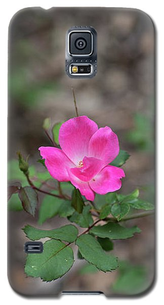 Lonely Pink Flower Galaxy S5 Case