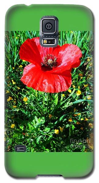 Lonely Poppy Galaxy S5 Case by Don Pedro De Gracia
