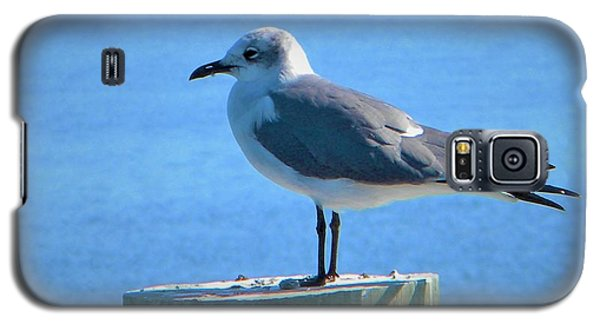Lonely Seagull Galaxy S5 Case