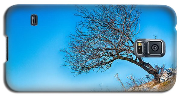 Lonely Tree Blue Sky Galaxy S5 Case by Jivko Nakev