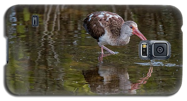 Long-billed Curlew - Male Galaxy S5 Case