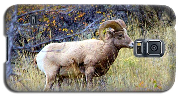 Galaxy S5 Case featuring the photograph Long Horns Sheep by Irina Hays