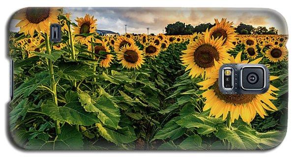 Long Island Sunflowers  Galaxy S5 Case
