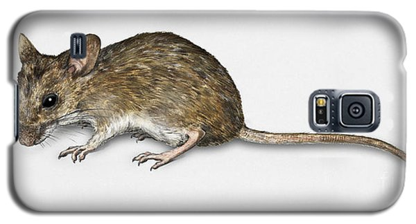 Long Tailed Field Mouse Apodemus Sylvaticus - Wood Mouse - Moulo Galaxy S5 Case