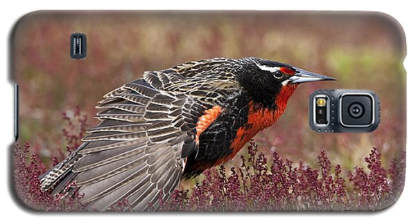 Long-tailed Meadowlark Galaxy S5 Case by Jean-Louis Klein & Marie-Luce Hubert